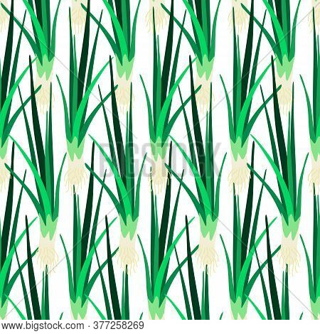 Vector Seamless Colorful Pattern With Eco Friendly Green Onion Leaves In Lines
