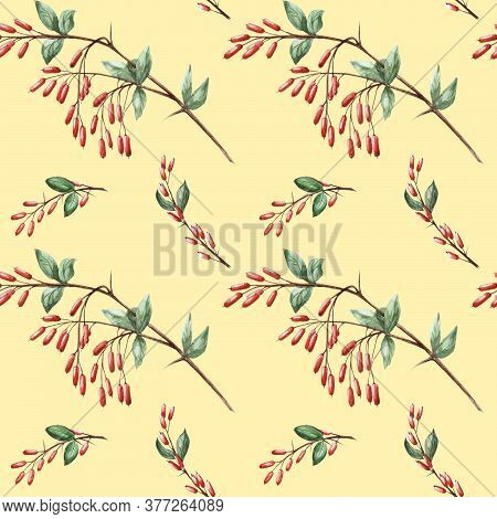 Seamless Pattern With Sprigs Of Watercolor Barberry