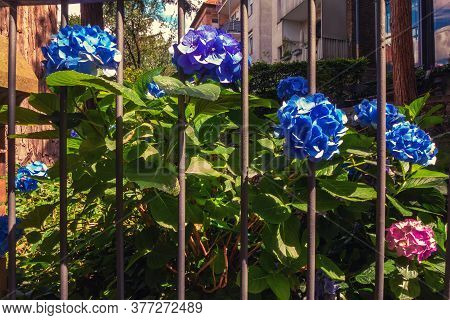 A Bunch Of Blue Flowers In A Small Garden