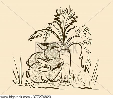 Cute Tame Rabbits Are Nibbling On A Large Carrot. Black And White Hand-drawn Drawing. Sketch.
