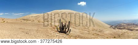 Cerro Blanco Sand Dune With Cactus, One Of The Highest Dunes On The World, Located Near Nasca Or Naz