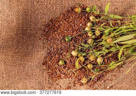 Close Up Flax Seeds In A Wooden Spoon. Composition With , Flax Seeds, And Plants On Sackcloth. Organ