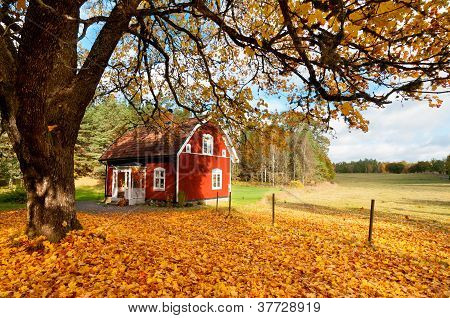Red Swedish House Amongst Autumn Leaves