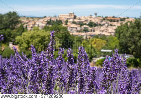 Valensole, France - July 5, 2020: Lavender Field In Provence, France Overlooking The City Of Valenso