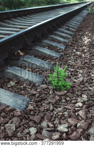 A Tiny Fir Tree Sprouted In The Rubble Of The Railway Embankment. It Will Be Cut Down Soon. The Stru