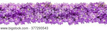 Seamless Endless Horizontal Banner Made Of Lilac Delphinium Isolated On A White Background. Top View
