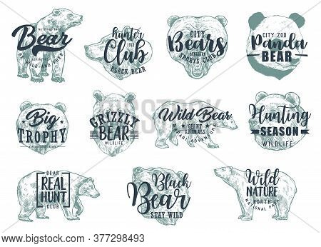 Bear Animal Sketches With Letterings. Vector Icons Of Hunting Sport, Hunter Club, Wild Nature And Sa
