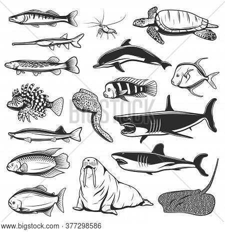 Sea Fish And Animals Vector Design With Isolated Icons Of Ocean Shark, Dolphin, Shrimp Or Prawn, Sea
