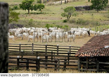 Pau Brasil, Bahia / Brazil - April 17, 2012: Cattle Corral Is Seen On A Farm In The Rural Area Of Th