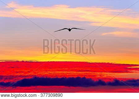 A Single Bird Silhouette Flying High Above The Ethereal Sunset Clouds