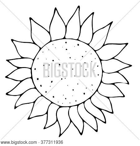 Autumn Harvest From The Garden - Flower Sunflower, Freehand Drawing, Vector Element In Doodle Style,