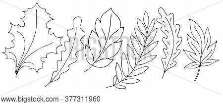 Autumn Objects - Leaves, Twigs, Mountain Ash, Freehand Drawing, Vector Set In Doodle Style, Coloring