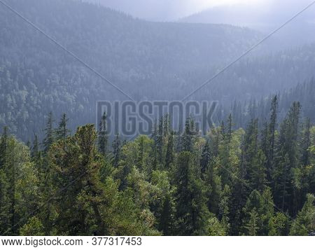 Forest In The Fog On The Hillsides