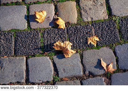 Dry Leaves On The Cobblestone Road . Autumn Symbol