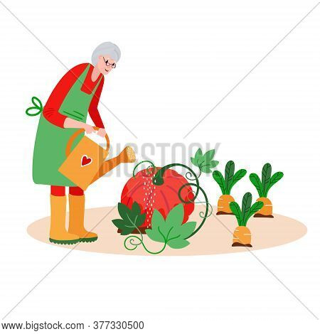 Senior Woman Watering Garden. Active Old Farmer Caring About Pumpkin, Carrots. Aged Retired Harvesti