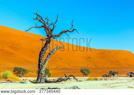 Dead trees and dead lake. Yellow-red dunes and ringing silence. The bottom of the dried lake Sussussflay. Clay plateau in the Namib Naukluft desert. The concept of exotic and photo tourism