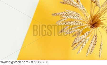 Spike Of Wheat In Ceramic Vase Close Up. Cereal Crop. Rich Harvest Creative Concept. Top View And Co