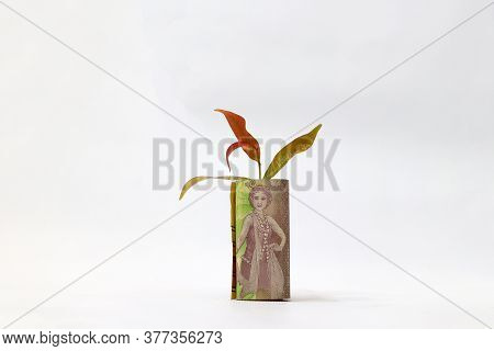 Rolled Banknote Money Five Thousand Indonesia Rupiah And Young Plant Grow Up With White Background.