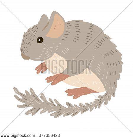 Cute Gray Fluffy Chinchilla, Pet, Vector Character
