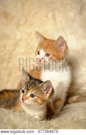 Two Kittens On A Shaggy Rug