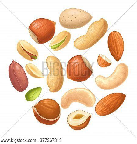 Set Whole And Half Nut Seed. Hazelnut, Peanut, Almond, Cashew, Pistachio. Vector Color Realistic Ill