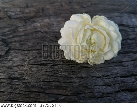 Jasminum Sambac Jasmineae White Flower Beautiful Bouquet On Wood Background