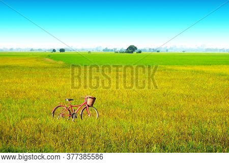 Beautiful Agriculture Jasmine Rice Farm And Soft Fog In The Morning Blue Sky White Cloud And Bicycle