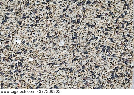 Detail Of Mixed Seeds Used In A Feeder Bird. Seeds Of Various Species For Cage And Wild Birds
