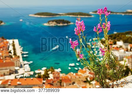 Flower Over The Harbor In Hvar Town, Croatia.