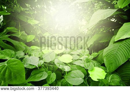 Tropical jungle fabulous forest with plants. Nature light green background.