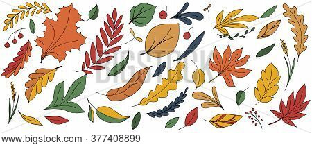 Colorful Autumn Leaves And Twigs - Red, Orange, Yellow, Freehand Drawing, Vector Set Of Elements In