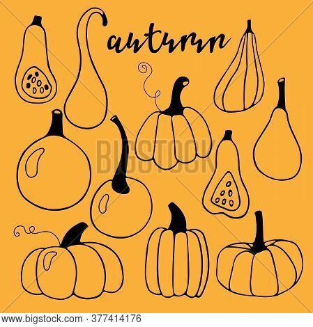 Hand Drawn Vector Autumn Lettering And Set Of Various Pumpkins. Harvest Season. Linear Illustration.