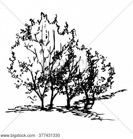 Monochrome Black And White Tree Bush Silhouette Sketched Line Art Isolated Vector