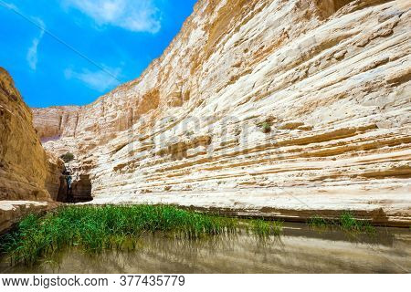 The greenish mirror lake with reeds. The canyon Ein Avdat is formed by the Qing River. Picturesque waterfall in the middle of the Negev desert. Israel. The concept of active and photo tourism