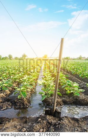 Management Of Watering Process Of Eggplant Plantation By Irrigation Canals System. European Farm, Fa