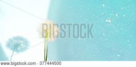 Creative Summer Concept With White Dandelion Inflorescences And Shadow On Blue Background. Close-up