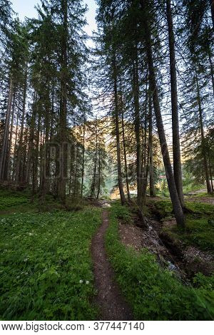 A Path That Runs Through A Forest In The Val Pusteria, South Tyrolean Dolomites