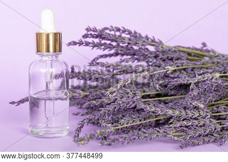 Lavender Essential Oil And A Lavender Bouquet On Violet Background, Dropper Glass Bottle Mock-up