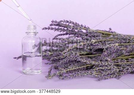 Lavender Essential Oil, A Drop Falls From Cosmetic Pipette And Lavender Bouquet On Violet Background