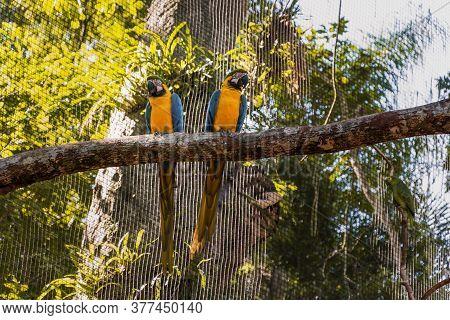 Species Of The Bird Park In Foz Do Iguacu Brazil, Ararauna