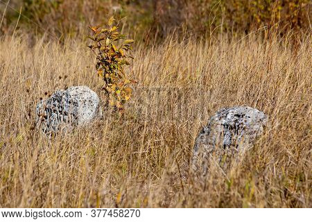 Abandoned Cemetery. Old Jewish Cemetery In The Fall. Tombstones On A Background Of Dry Grass In A Ce