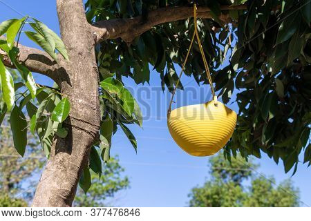 Bird Feeding Water Pot Hang On Tree Over Blue Sky