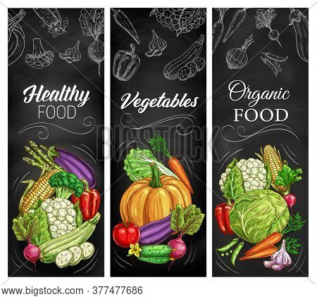 Vegetable Sketches On Chalkboard, Vector Farm And Garden Food. Carrot, Tomato, Pepper And Cabbage, B