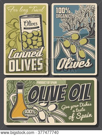 Olive Oil, Tree And Green Fruits, Vector Food. Juf Of Extra Virgin Oil, Fresh Olive Branch And Can O