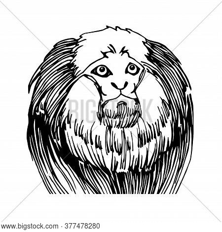 Shaggy Head Of A Marmoset Monkey, A Funny Smart Pet With An Emotional Face, Vector Illustration With