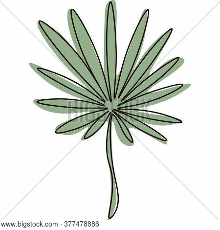 Vector Palm Leaf Line Art Illustration Exotic Palm Leaves Jungle Tropic Elements, Aloha Collection B