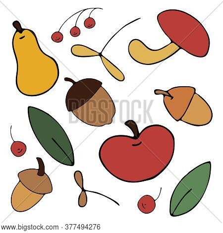 Autumn Harvest From The Garden And From The Forest - Apples, Pears, Acorns, Mountain Ash, Freehand D