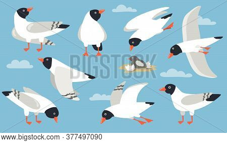 Atlantic Gull Set. Cartoon Sea Bird Flying In Sky, Hatching, Standing, Pecking. Cartoon Illustration