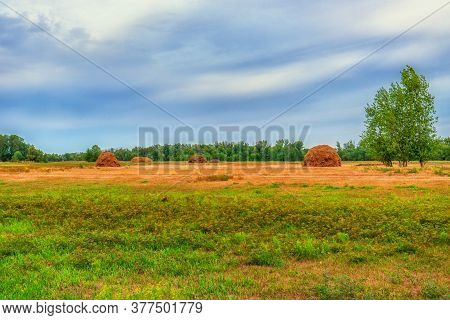 Picturesque Summer Landscape With Beveled Meadow And Haystacks In Cloudy Morning. Hay Harvest At Far