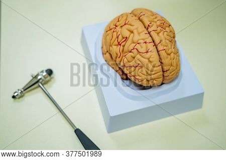 Brain Model On The Table. Neurosurgery Concept. Neurosurgery Hummer. . Brain Human Anatomy. 3d Rende
